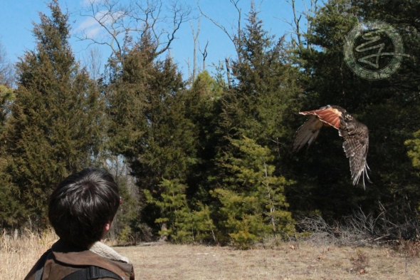 Eva King and Kira (Red-tailed Hawk)