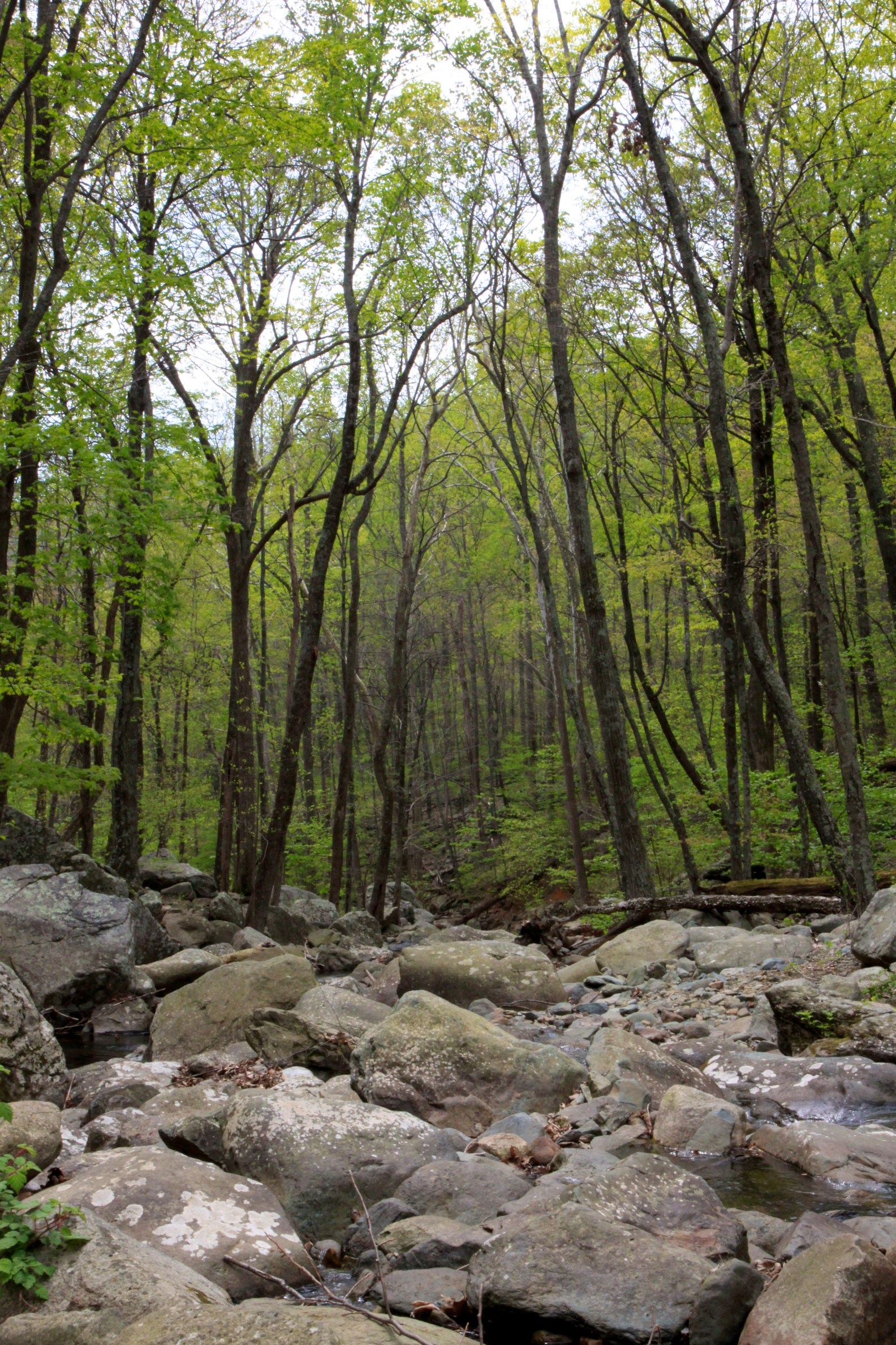 Hiking for brook trout in shenandoah national park for Shenandoah national park fishing