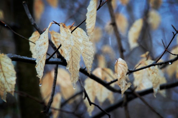 IMG_0070 - 2012-02-11 at 10-29-53